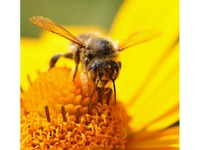 Sortie apicole : le rucher de la forêt d'Andaine