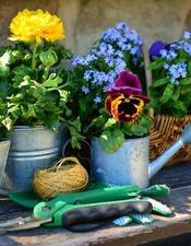 garden-flowers-plant-flowers-gardening-spring-forget-me-not-gardener-bank-1382748-2
