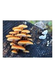 """Nature en famille : """"Découverte des champignons"""""""