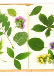 """Nature en famille : """"Atelier création : impression de feuilles"""""""
