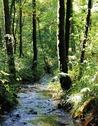 Sortie nature 348x240